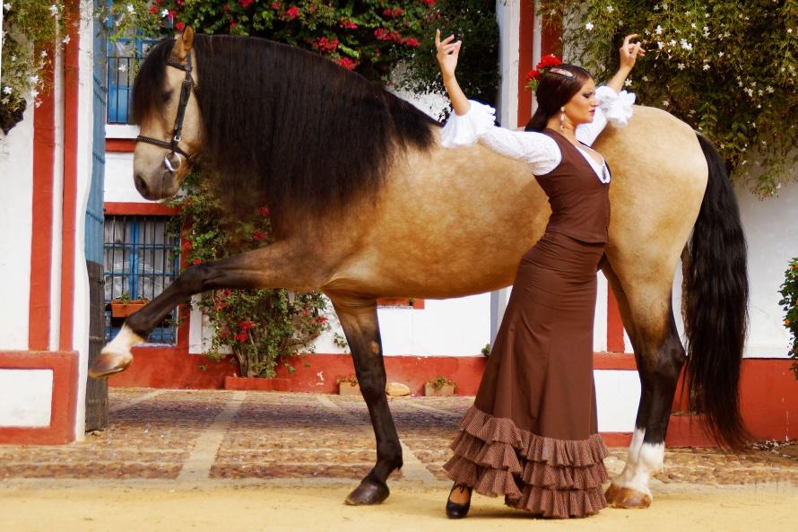 Grand Pre Car >> Découvrez l'école royale andalouse d'Art équestre   Le Mag des cavaliers voyageurs
