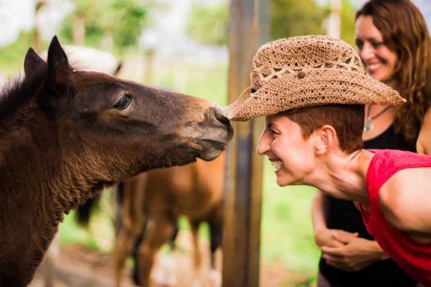 Sciences : l'étonnante mémoire affective des chevaux | Le Mag des cavaliers  voyageurs