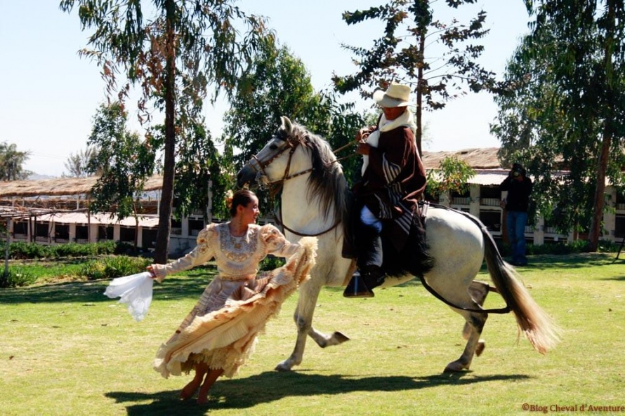 Le Paso Peruano est un formidable cheval de spectacle : on dirait qu'il danse ! @Blog Cheval d'Aventure
