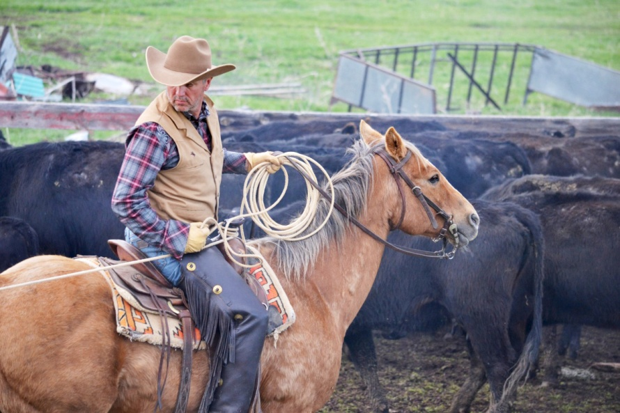 Participez à la Branding week dans un ranch américain ! | Le