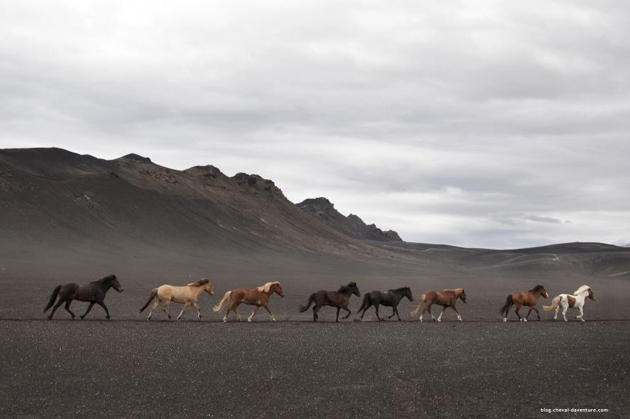 Rencontre homme islandais